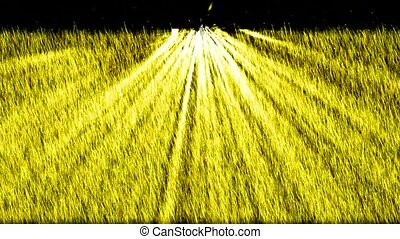yellow light exposure on the grass,