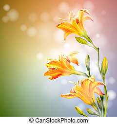 Yellow lilies flowers background.