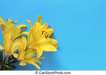 yellow lily close-up on a blue background, a place for text