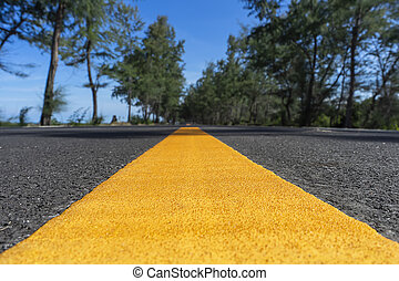 Yellow line on road with pine trees and blue sky.