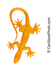 Yellow lizard isolated on white background