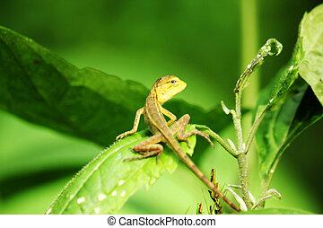 Yellow lizard on leaf