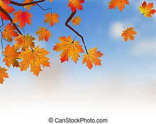 Yellow maple, autumn.