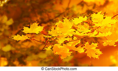 Yellow maple branch on fall background