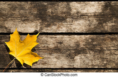 Yellow Maple Leaf Background