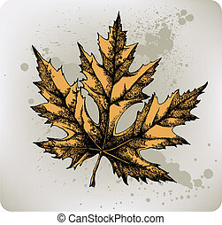 Yellow maple leaf, hand-drawing. Ve