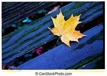 Maple Leaf on Bench