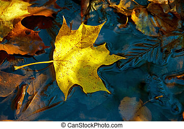 Yellow maple leaf on the ice