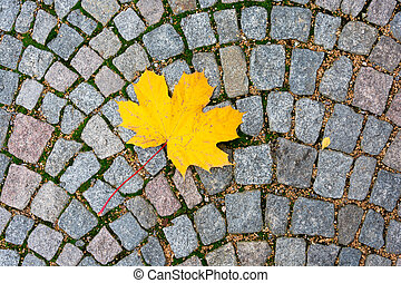 Yellow maple leaf on the road tile