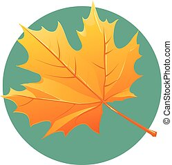 Yellow maple leaf vector illustration