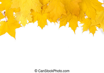 Yellow maple leaves frame