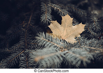maple leaves in autumn background