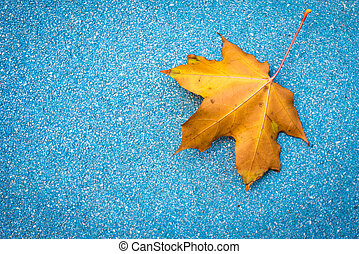 yellow maple leaves in blue stone background