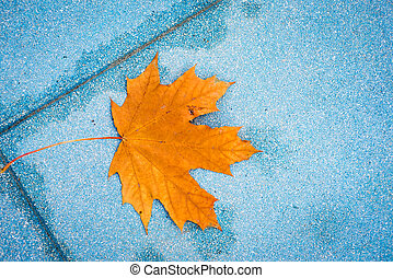 yellow maple leaves in stonebackground