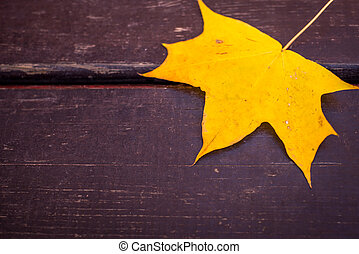 yellow maple leaves in wooden background