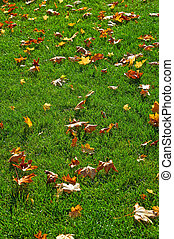 Yellow maple leaves on green lawn