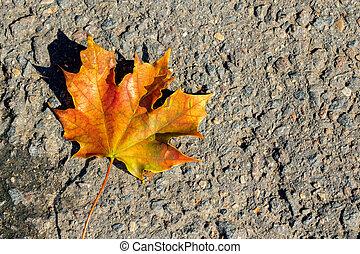 Yellow maple leaves on the asphalt, autumn
