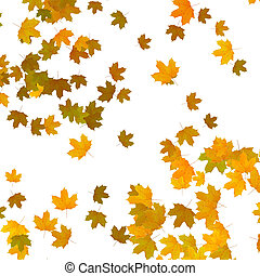 yellow maple leaves over white background