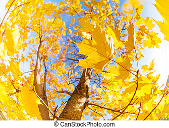 Yellow maple tree leaves composition over sky - Many autumn...