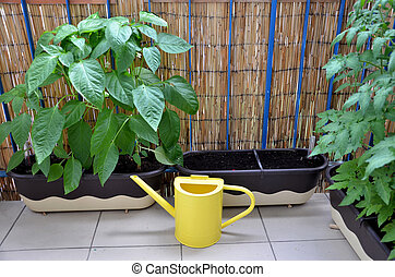 Yellow metal watering can on the balcony next to pepper and tomato plants in flower boxes