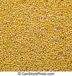 yellow millet grains - yellow millet close up shot of grains...