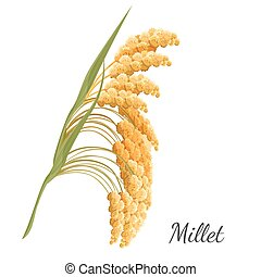 Yellow millet isolated on white. Realistic vector...