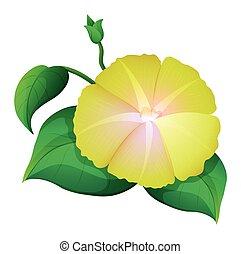 Yellow morning glory flower on white background illustration