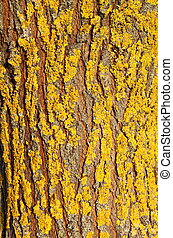 Yellow moss on bark
