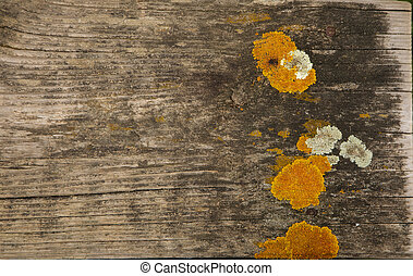 Yellow moss over a wooden plank