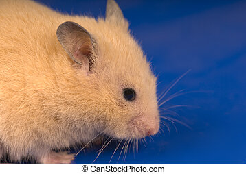 Yellow mouse close-up