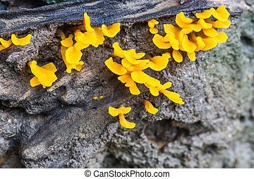 yellow mushrooms in the forest