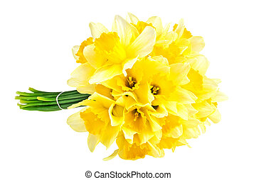 Yellow narcissus flowers isolated on white background