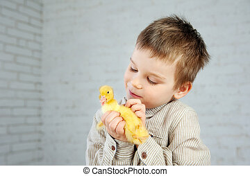 Yellow newborn duckling in the little boy's hands on a white background