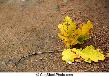 oak leaf on the path