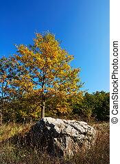 Yellow oak tree