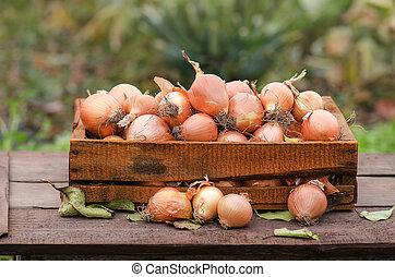 Yellow onion in box