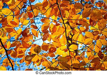 autumn foliage - Yellow, orange and red autumn foliage at ...