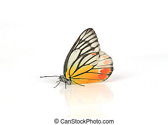 Yellow-orange butterfly, isolated on white background