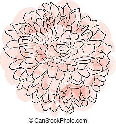 Yellow orange chrysanthemum flower, Spring flower watercolor. Isolated on white background. Vector golden-daisy