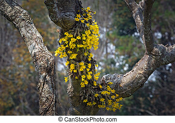 Yellow orchid flowers in the wild.