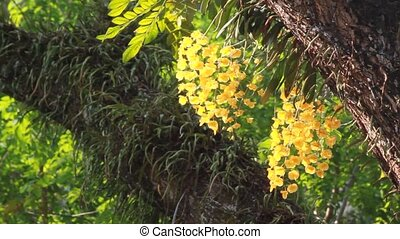 yellow orchid in forest