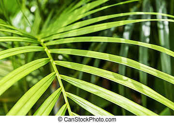 Yellow palm or green tropical leaves with sunlight background