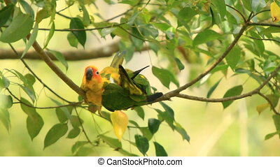 Yellow Parrot and Red Parrot