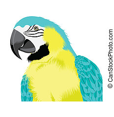 yellow parrot cute pose vector of illustration