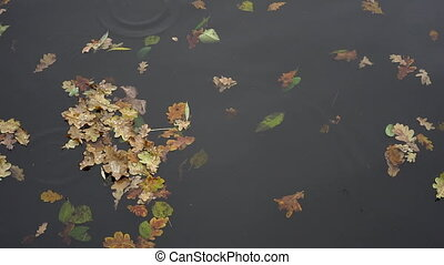 yellow puddle leaves autumn floating in pool
