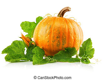 yellow pumpkin vegetable with green leaves isolated on white...