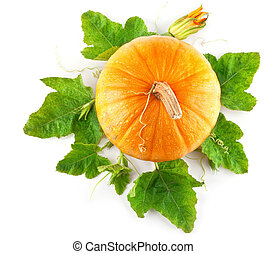 yellow pumpkin vegetable with green leaves