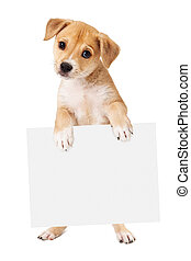Yellow Puppy Carrying Blank Sign - A cute mixed retriever...