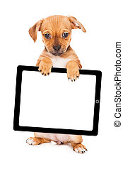 Yellow Puppy Holding Computer Tablet