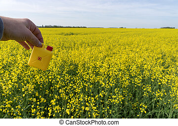 Yellow rape oil canister in hand